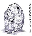 engrave ink draw hamster... | Shutterstock . vector #388805824