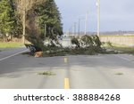 A Large Tree Branch Fell On A...