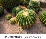 Cactus Planted In A Garden