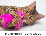 Stock photo beautiful young bengal kitten looking into the camera with round big eyes 389013826