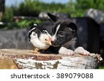 Stock photo easter puppy dog with a little chicken 389079088