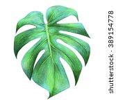 Tropical Dragon Leaf Drawing