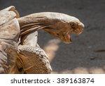 A Closeup Portrait Of A Leopar...