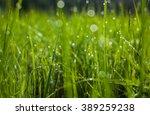 Green Grass. Dew Drops Close U...