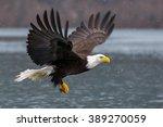american bald eagle in flight... | Shutterstock . vector #389270059