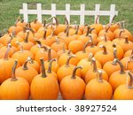 White Fence With Pumpkins