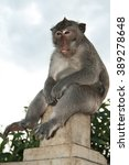 Small photo of Alpha male of monkey is showing a tongue