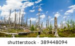 Dead Forest Destroyed By Wood...