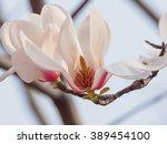 half of magnolia flowers.... | Shutterstock . vector #389454100