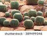 Cactus ,plants, desert plants,nature.