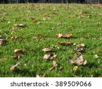 brown leaves on green grass | Shutterstock . vector #389509066