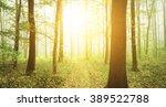foggy green forest | Shutterstock . vector #389522788