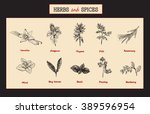 herbs and spices set. medicinal ... | Shutterstock .eps vector #389596954