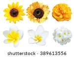 Set Of Isolated Yellow And...