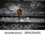Railway Embankment  Rails And...
