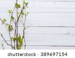 Sprig Of Birch Trees With...