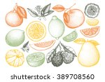 vintage ink hand drawn... | Shutterstock . vector #389708560