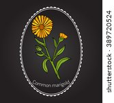 Medicinal Plant Calendula...