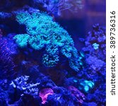 Sea Anemones And Corals In...