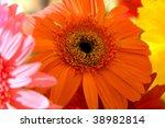Orange herbera bouquet - stock photo