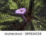 Small photo of Forest Fungi Hampshire England Amethyst Deceiver in moss tree trunk