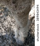 root or stump | Shutterstock . vector #389843494