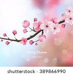 Cherry Blossom Realistic Vecto...