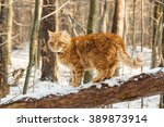 wild red cat goes on a branch...   Shutterstock . vector #389873914