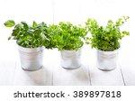 fresh green herbs in pots on a... | Shutterstock . vector #389897818