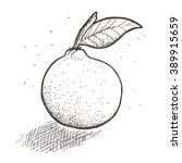 hand drawn vector fruit    Shutterstock .eps vector #389915659