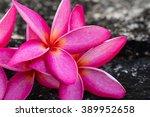 frangipani tropical flowers ... | Shutterstock . vector #389952658