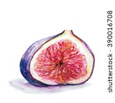 hand drawn watercolor fig on...   Shutterstock .eps vector #390016708