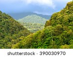 View Of Mountain Forest...