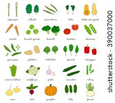 hand drawn vegetables isolated... | Shutterstock .eps vector #390037000
