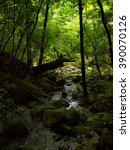 railway trail yakushima... | Shutterstock . vector #390070126
