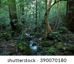 railway trail yakushima... | Shutterstock . vector #390070180