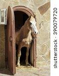light brown horse standing in a ... | Shutterstock . vector #390079720