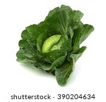 Savoy Cabbage Head Isolated On...