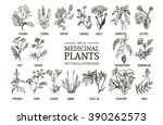 vector collection of hand drawn ... | Shutterstock .eps vector #390262573