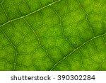 Leaf Texture.  Leaf Texture.