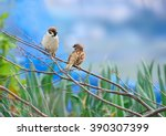 Tree Sparrows On Branch