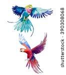 Two Exotic Birds. Watercolor...