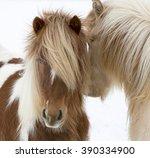 portrait of icelandic horses... | Shutterstock . vector #390334900