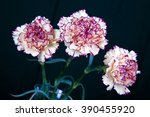 yellow and red carnation... | Shutterstock . vector #390455920