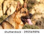 german shepherd dog head. | Shutterstock . vector #390569896