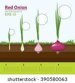 vector illustration. phases of... | Shutterstock .eps vector #390580063