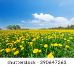 Yellow Flowers Field Under Blu...