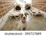 shelter dog is is a beautiful... | Shutterstock . vector #390717889