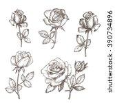 vintage rose. hand drawn vector ... | Shutterstock .eps vector #390734896