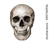 Front Side View Of Human Skull...
